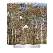 Quartet In The Trees Shower Curtain