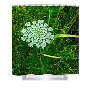 Queen Annes Glory Shower Curtain