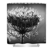 Queen Annes Lace - Bw Shower Curtain