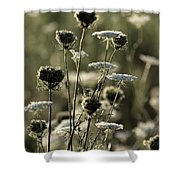 Queen Annes Lace - 1 Shower Curtain