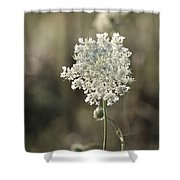 Queen Annes Lace - 3 Shower Curtain