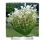 Queen Anne's Lace Flower Unfolded Shower Curtain