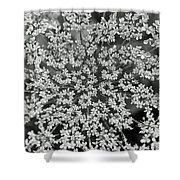 Queen Anne's Lace In Black And White Shower Curtain