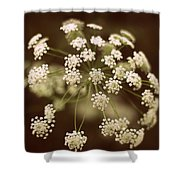 Queen Anne's Lace Shower Curtain