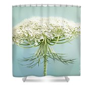 Queen Anne's Lace Wildflower Shower Curtain