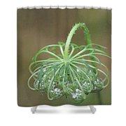 Queen Ann's Lace Shower Curtain