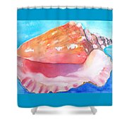 Queen Conch Shell Shower Curtain