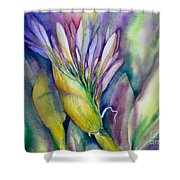 Queen Emma's Lily Blossom Shower Curtain