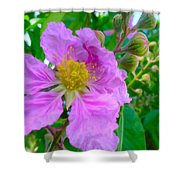 Queen Flower Or Giant Crepe Myrtle Flower Shower Curtain by Lanjee Chee