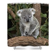Queensland Koala Juvenile Australia Shower Curtain