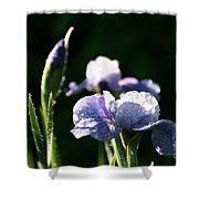 Quenched Overnight Shower Curtain
