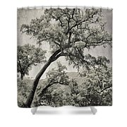 Quercus Suber Retro Shower Curtain