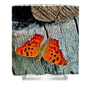 Question Mark Butterfly Shower Curtain