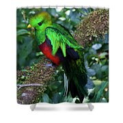 Quetzal Shower Curtain