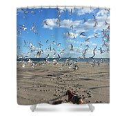Quick Fly Away Shower Curtain