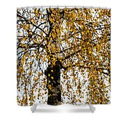Quiet Charm Of Autumn Shower Curtain