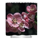 Quince 5160 Shower Curtain