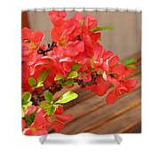 Quince Blossoms Shower Curtain