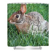 Rabbit On The Run Shower Curtain