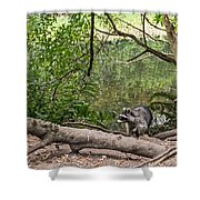 Raccoon At The Lake Shower Curtain