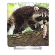 Raccoon Baby Shower Curtain