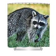 Raccoon Buddy Shower Curtain