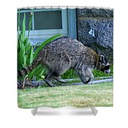 Raccoon In Flight Shower Curtain
