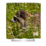 Raccoon In The Meadow Shower Curtain