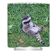 Raccoon Plays In The Grass Shower Curtain