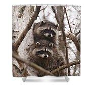Raccoon Siblings Shower Curtain
