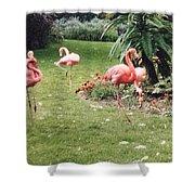Racing Flamingos Shower Curtain