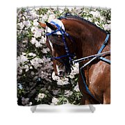 Racing Horse  Shower Curtain