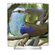 Racket Tailed Roller Shower Curtain