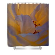 Radiance Shower Curtain by Cathleen Cario-Reece