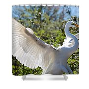 Radiant Great Egret Shower Curtain