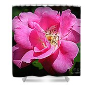 Radiant In Pink - Rose Shower Curtain