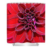 Radiant In Red - Dahlia Shower Curtain