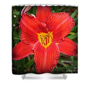 Radiant In Red - Daylily Shower Curtain