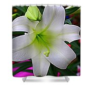 Radiant In White - Lily Shower Curtain