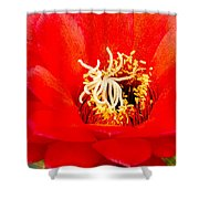 Radiant Red Cactus Flower Shower Curtain