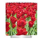 Radiant Red Shower Curtain