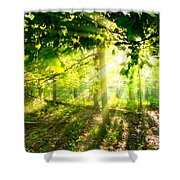 Radiant Sunlight Through The Trees Shower Curtain