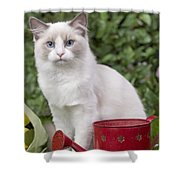 Ragdoll Cat Shower Curtain