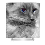 Ragdoll In Black And White Shower Curtain