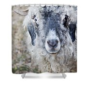 Raggedy Goat Shower Curtain