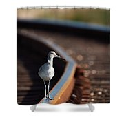 Railroaded Willet  Shower Curtain