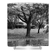Rain And Leaf Ave In Black And White Shower Curtain