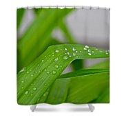 Rain Beads IIi Shower Curtain