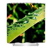 Rain Blade Shower Curtain
