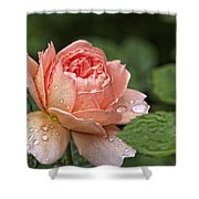 Rain Drenched Rose Shower Curtain